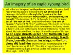 an imagery of an eagle young bird