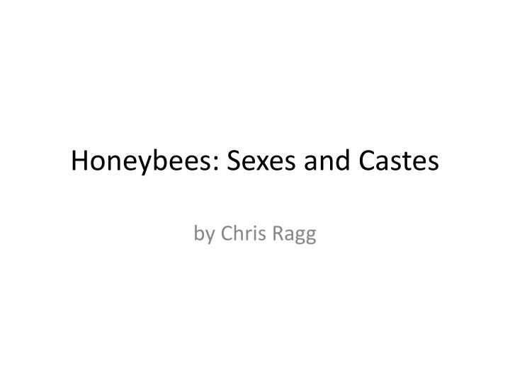honeybees sexes and castes n.