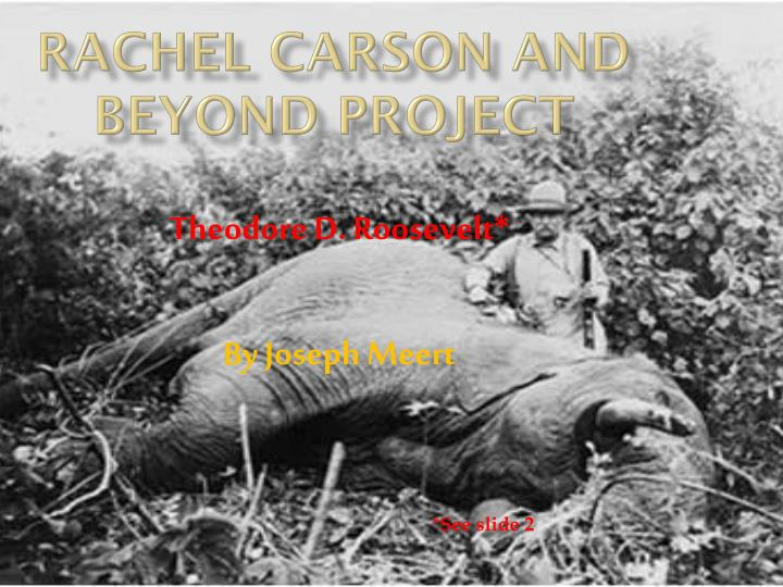 rachel carson and beyond project n.