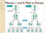 meiosis 1 and ii male vs female