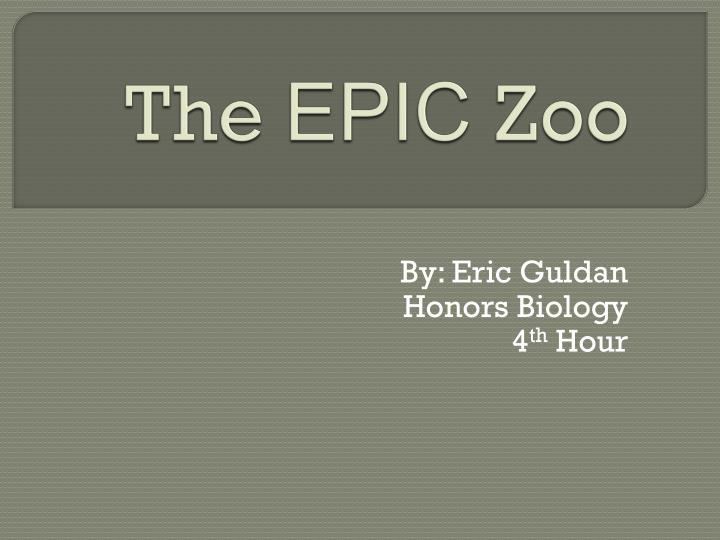 the epic zoo n.