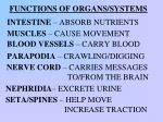 functions of organs systems