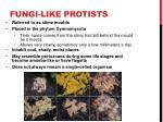 fungi like protists