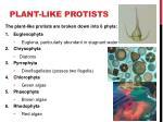 plant like protists1