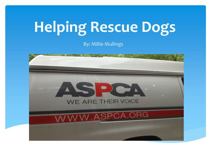 helping rescue dogs n.