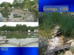 ecology 1000