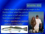 wildlife 800