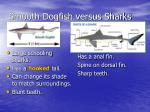 smooth dogfish versus sharks