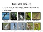 birds 200 dataset