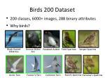 birds 200 dataset1