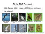 birds 200 dataset2