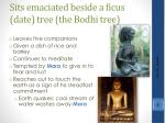 sits emaciated beside a ficus date tree the bodhi tree