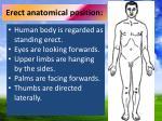erect anatomical position