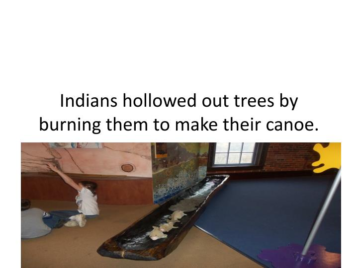 indians hollowed out trees by burning them to make their canoe n.