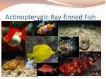 actinopterygii ray finned fish