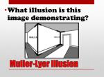 muller lyer illusion