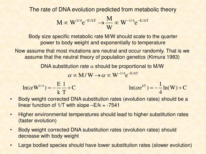 The rate of DNA evolution predicted from metabolic theory