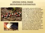 arizona coral snake micruroides euryxanthus
