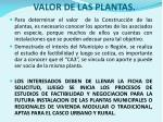 valor de las plantas