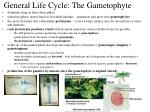 general life cycle the gametophyte