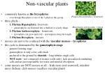 non vascular plants