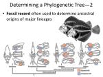 determining a phylogenetic tree 2