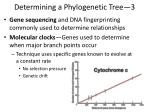 determining a phylogenetic tree 3