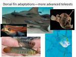 dorsal fin adaptations more advanced teleosts