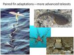 paired fin adaptations more advanced teleosts