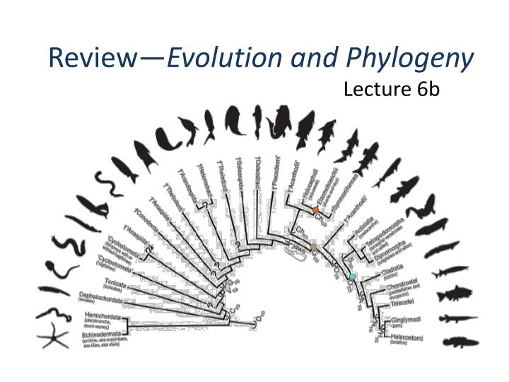 review evolution and phylogeny n.