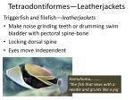 tetraodontiformes leatherjackets