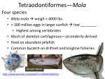 tetraodontiformes mola