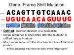 gene frame shift mutation