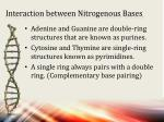 interaction between nitrogenous bases