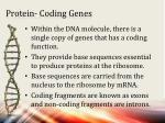 protein coding genes