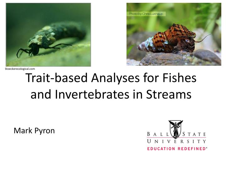 trait based analyses for fishes and invertebrates in streams n.