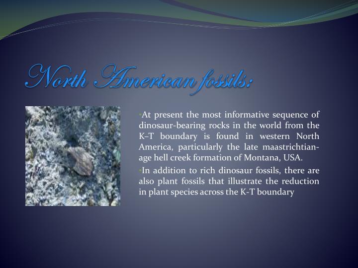 North American fossils: