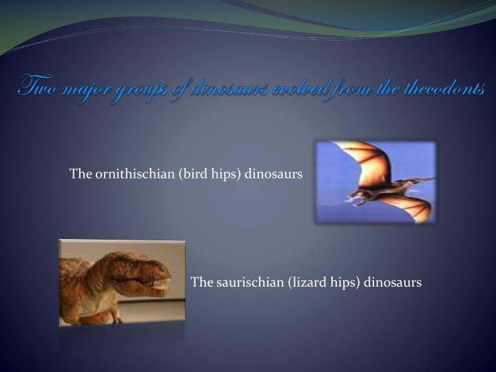 Two major groups of dinosaurs evolved from the thecodonts