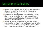 digestion in carnivores