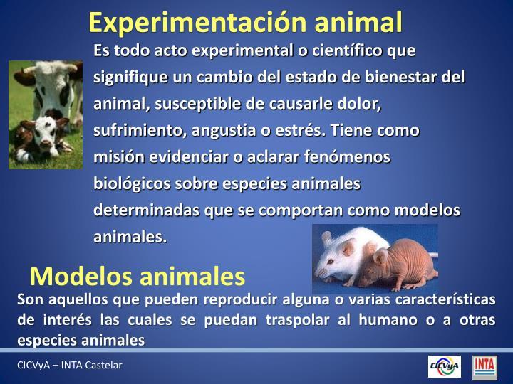 Experimentación animal