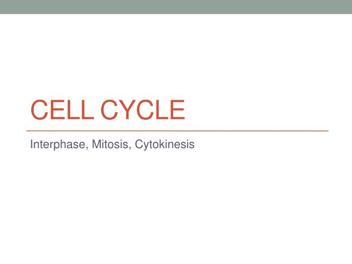 cell cycle n.