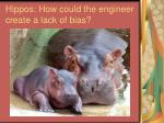 hippos how could the engineer create a lack of bias