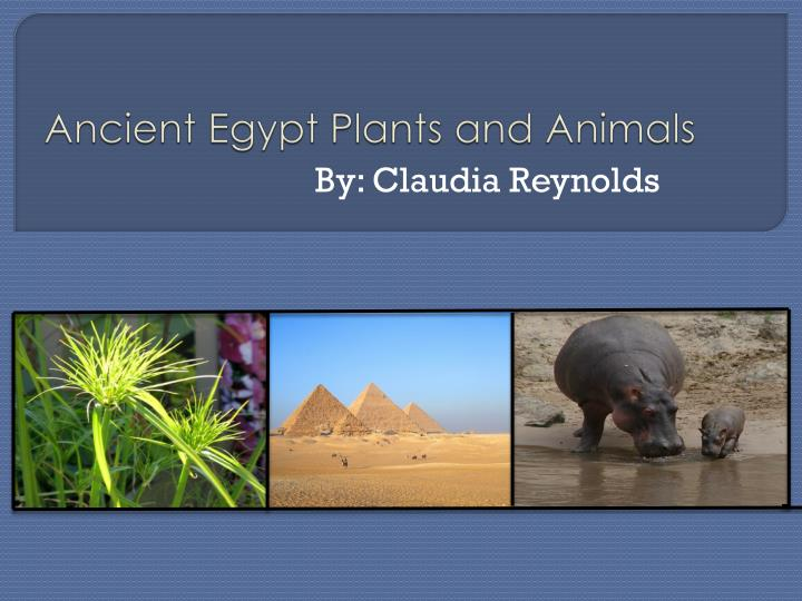Ancient egypt plants and animals