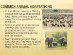 common animal adaptations