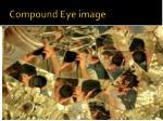compound eye image