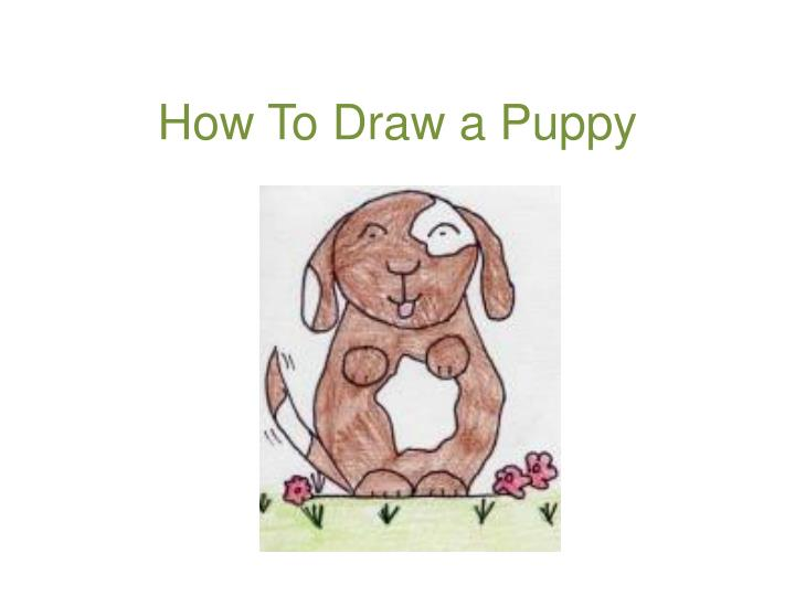 how to draw a puppy n.