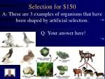 selection for 1501