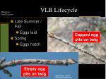 vlb lifecycle