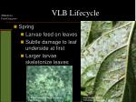 vlb lifecycle1