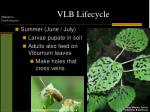 vlb lifecycle2